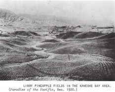 Kaneohe Pineapple Fields-1920
