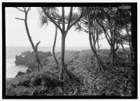 Kings Highway footpath between Wainopoli State Park and Town of Hana-Hana Belt Road-(LOC)-219754pv