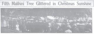 Malihini Tree - Dec_29,_1913