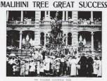 Malihini Tree - PCA-Dec_28,_1910