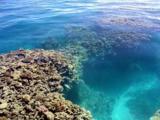 Maro_Coral-at-Surface-Dameron