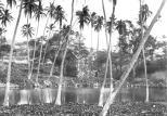Napoopoo Pond-Lualiiloa Pond-Old Prison in Background-DLNR