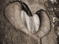 Nature_heart (1)