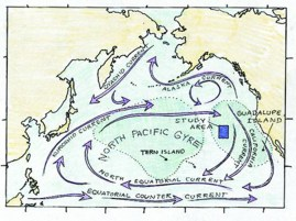 North Pacific Currents