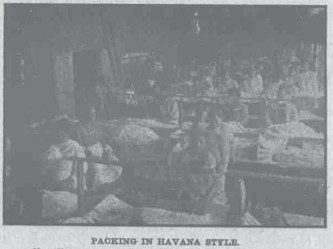 Packing the Havana Style-HawaiianGazette-07-25-1911
