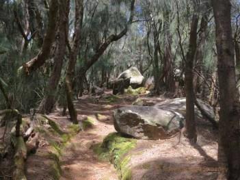 Palaau_State Park
