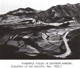 Pineapple-Southern_Kaneohe-1923