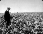 Pineapple_1900