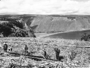 Portable sugar cane flumes in field near Kukuihaele, Hawaii, looking toward Waipio-(BM)