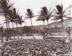Punahou-Lily-Pond-and-Tennis-Courts-1916