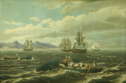 Rotch fleet in the midst of a school of sperm whales off the coast of Hawaii-LOC-1833
