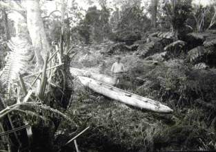 Roughed out Canoe at the 4,500' Elevation in Dense Koa forest-Sept 11, 1885