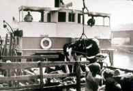 SS James Makee Cattle Steamer