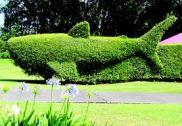 Shark_Hedge-Whittle-Waimea