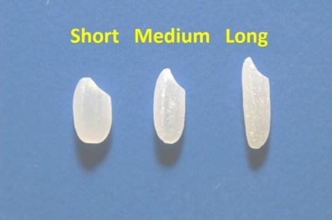 Short-Medium-Long Grain Rice