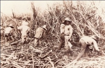 Sugarcane_plantation_workers-400