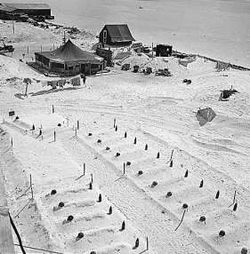 Tarawa-graves