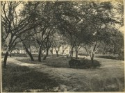 Teacher's Cottage is visible behind this grove of trees on the Kaʻiwiula campus