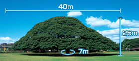 The Hitachi Tree-size