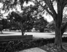 Thomas Square-Historic Hawaii Foundation