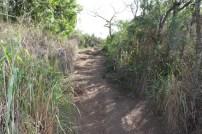 Trail to lanikai-bunkers-punynari