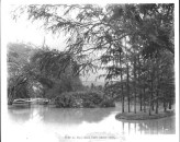 View_in_Kapiolani_Park_about_1900
