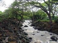 Waikahalulu-Falls-HonoluluBotanicalGardens