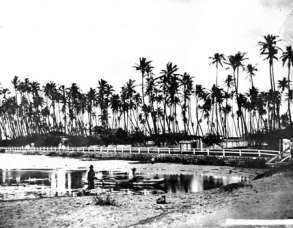 Waikiki-1868
