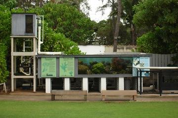 Waikiki_Aquarium (Courtesy Waikiki Aquarium)