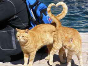 cats-heart-shape-with-tail-perfect-timing