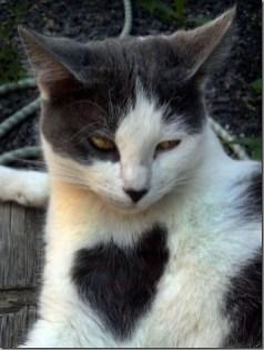 heart_cat