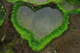 hearts-in-nature-09