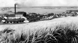 honolulu_plantation_williams_1915