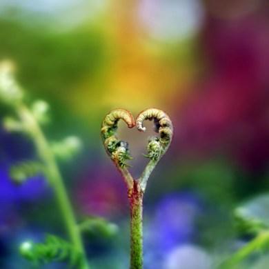 nature-heart26