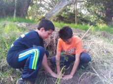 team-work-planting-HFI