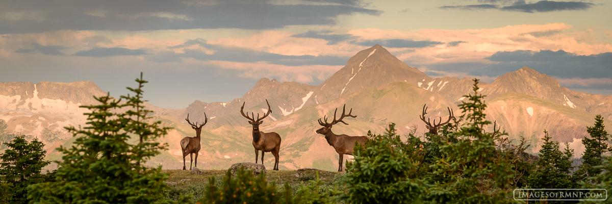 Elk Ridge Pano Mummy Range Rocky Mountain National Park