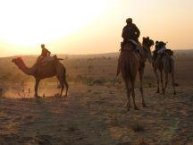 camels depart at dusk