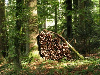 woodstack in forest, Switzerland