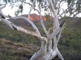 Mount Sondor, Larapinta Trail, West MacDonnell Ranges, NT