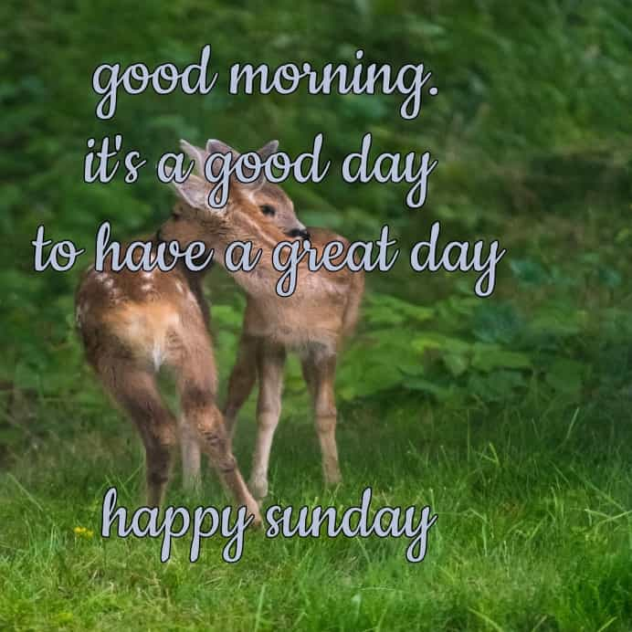 morning wishes for Sunday