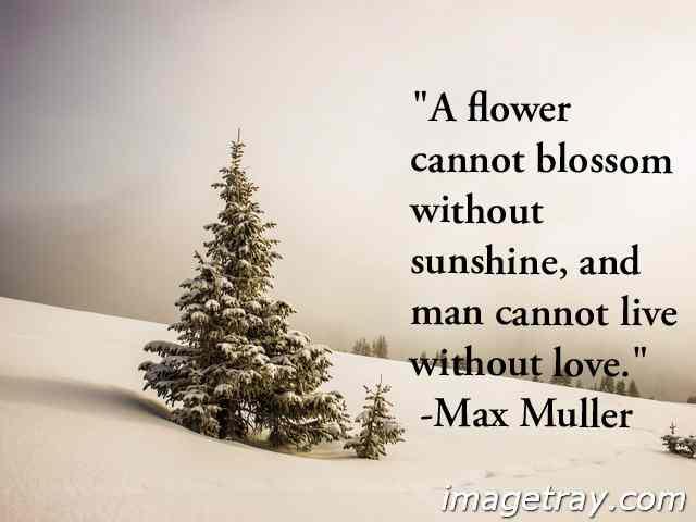 true love win quotes