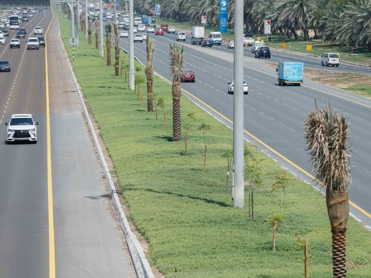 Photo of Abu Dhabi plants 494 trees to beautify roadside areas