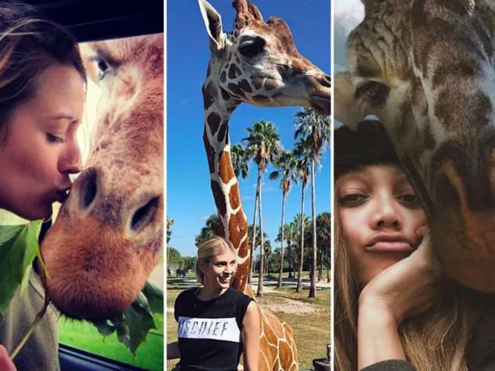 Celebrities With Giraffes
