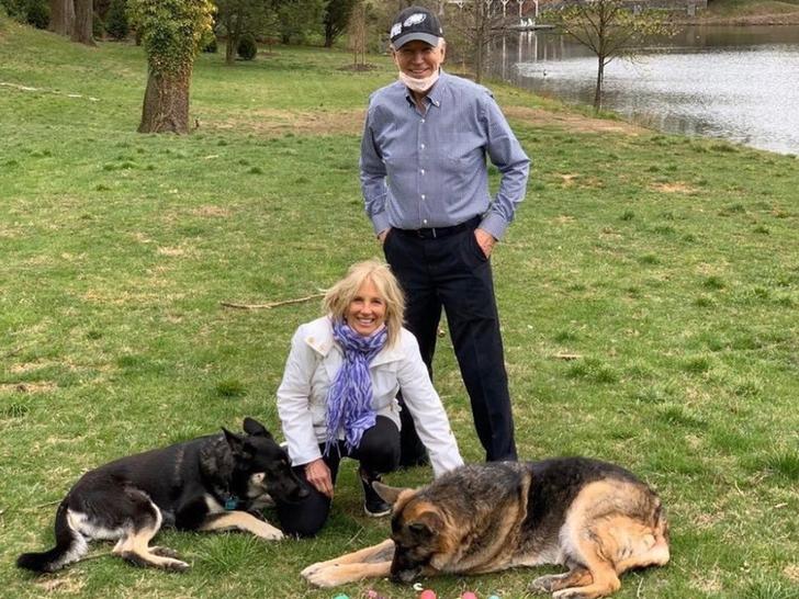 Joe and Jill's Dogs Major and Champ