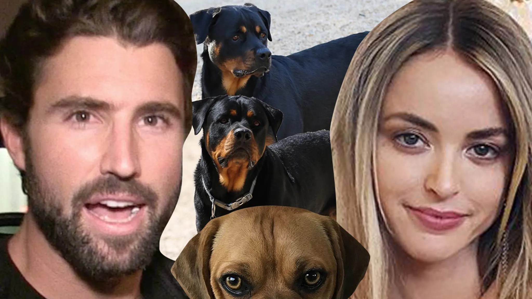 Brody Jenner and Kaitlynn Carter Co-Parenting Dogs, Not Back Together
