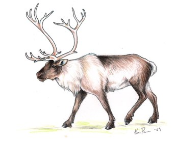 Imaginary Karin - reindeer drawing