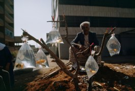 A man sells goldfish in baggies tied to a tree branch in Beirut, Lebanon, February 1983.
