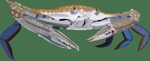 Rock-Pool-Crab-Barry-Brunswick-Blog