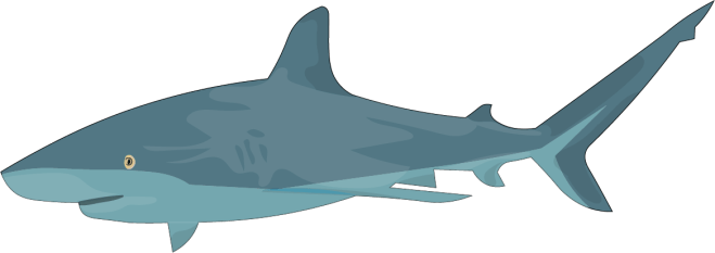 Barry-Brunswick-Fun-Facts-About-Sharks-Bull-Shark