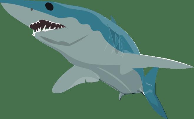 Barry-Brunswick-Fun-Facts-About-Sharks-Mako-Shark